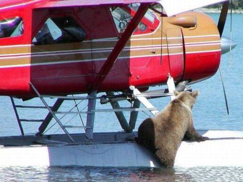 bear-on-a-plane